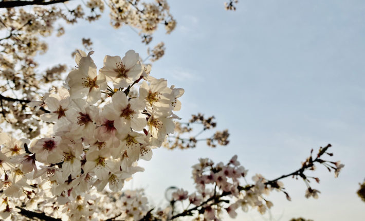 桜ウエディング-フリーウエディングプランナー福岡-家族だけの結婚式