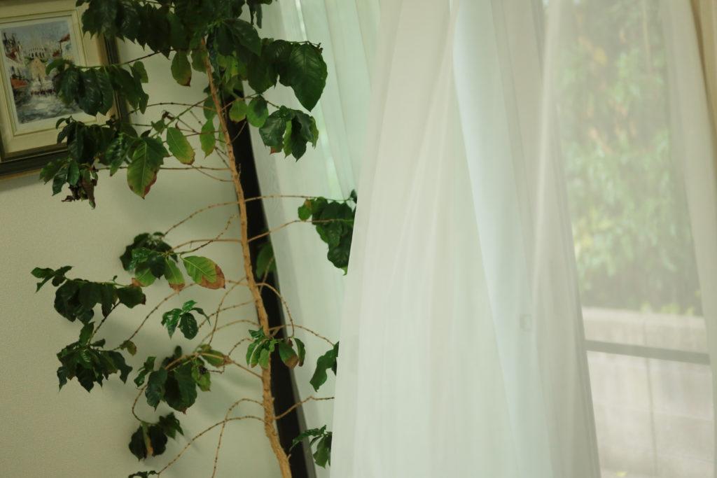 自宅ウエディング、インテリア、北九州フリーウエディングプランナー